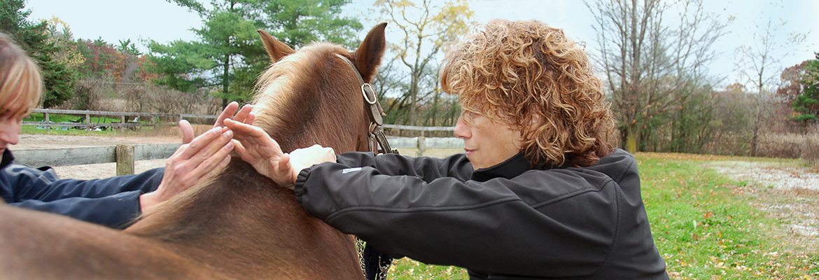 Dr Annette doing an adjustment on Horse